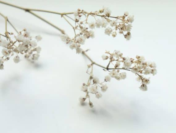 Foto uit de cursus fotografie basis: takje met witte bloemen tegen een witte achtergrond
