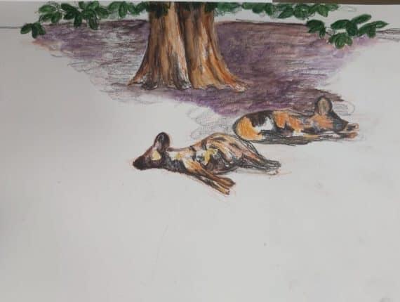 Tekenen en schilderen in Artis