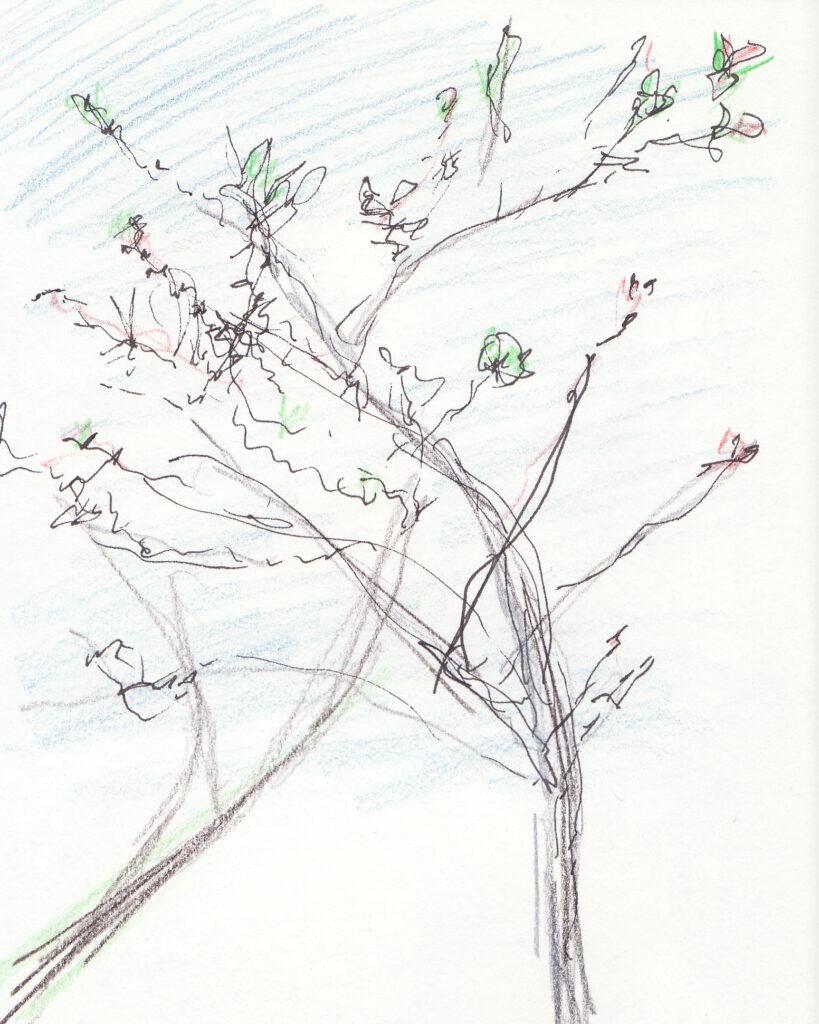 Tekening van prunus in avondlicht - Katelijne Brouwer