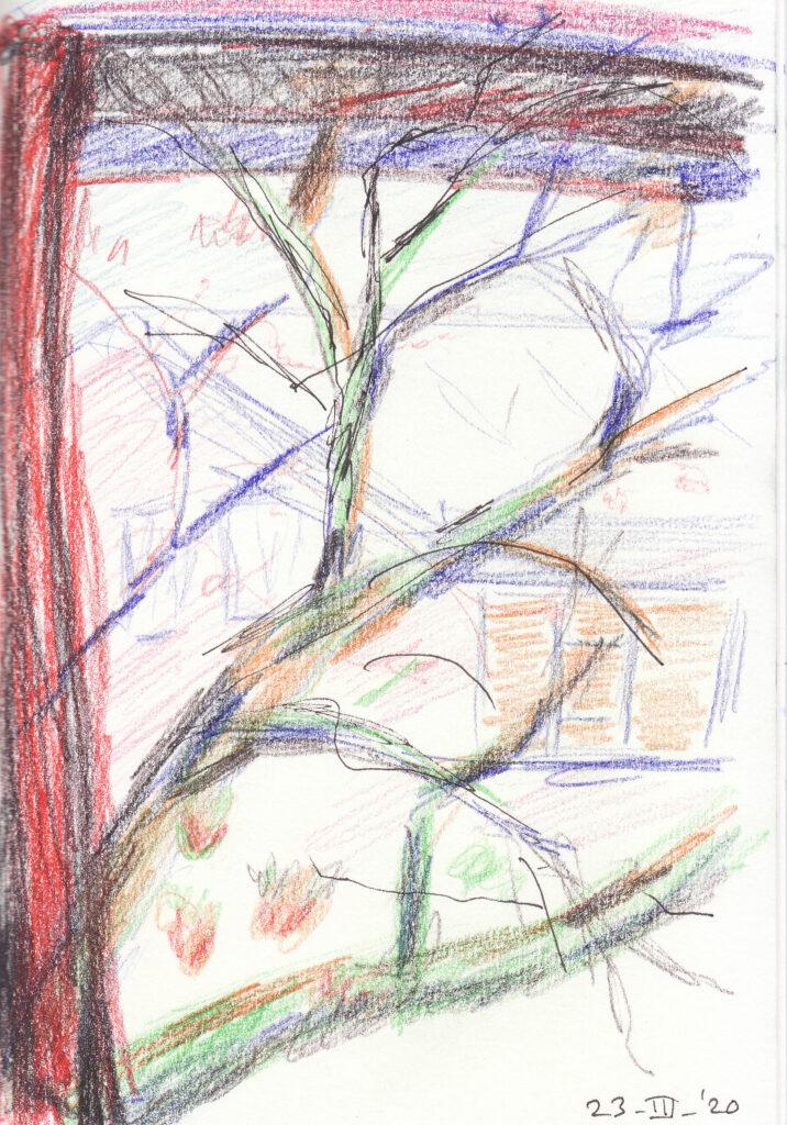 De boom uit mijn raam - Katelijne Brouwer