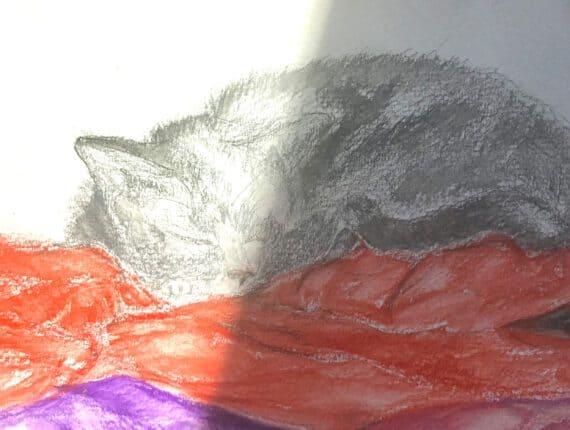 De kat slaapt door alles heen