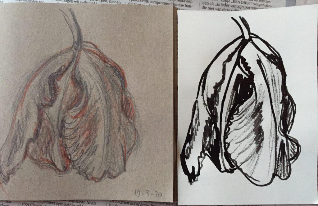 Tulpen potlood en inkt - Eliane Attinger