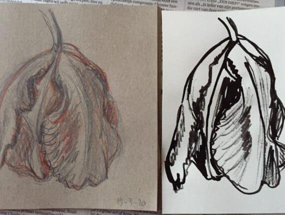 Tulpen potlood en inkt