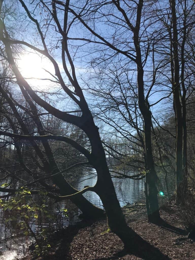 Amsterdam Bos - jolanthe berretty