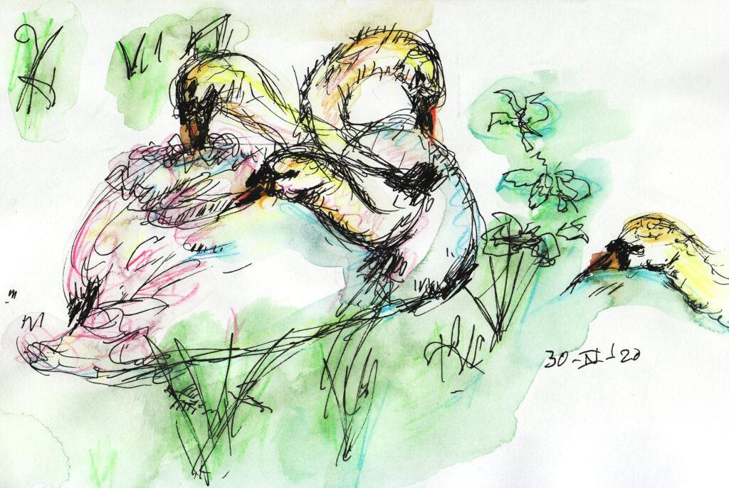 duizend nekken zwaan - Katelijne Brouwer