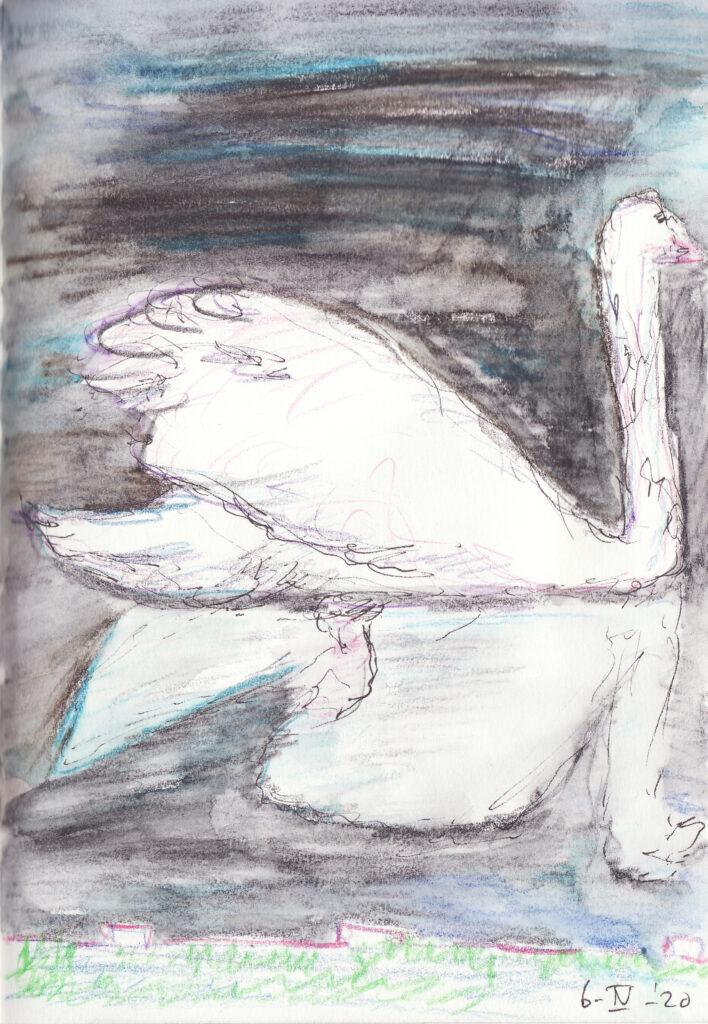 Zwaan met reflectie - Katelijne Brouwer