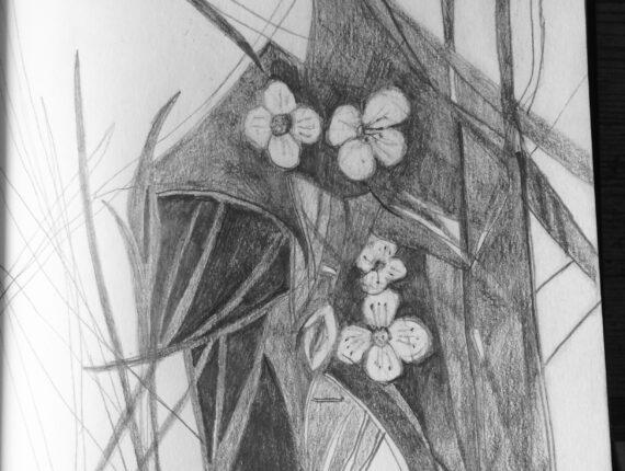 Pinksterbloemen verscholen in het hoge gras