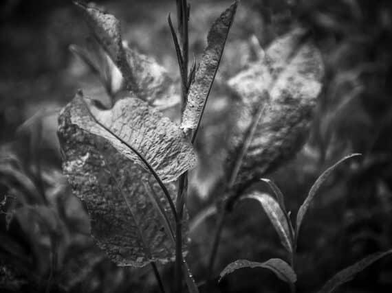De kracht van Zwart-Wit fotografie